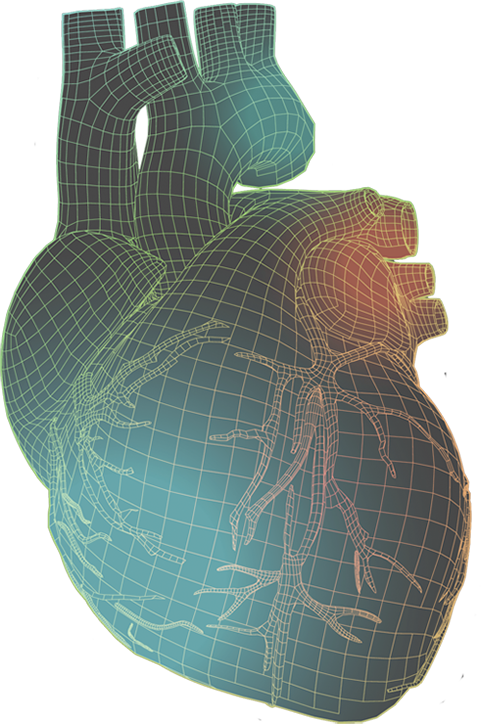 Human heart with colorful wireframe illustration
